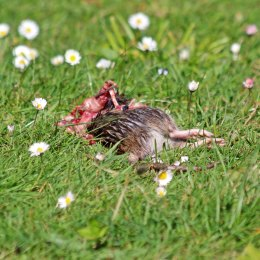200511 magpie (3)