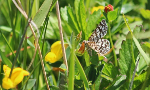 200521 latticed heath (1)