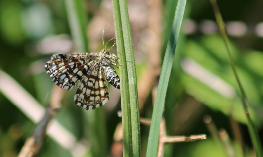 200521 latticed heath (3)