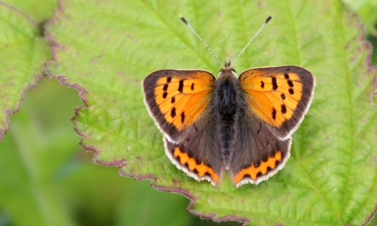 200720 small copper