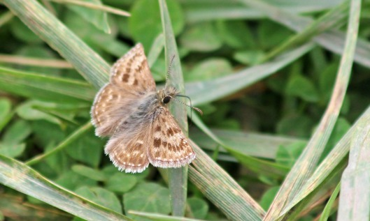 200807 dingy skipper 4aug