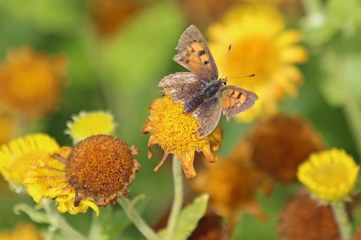 200823 b small copper
