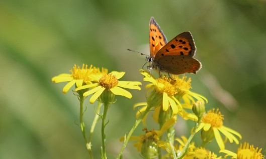 200831 small copper