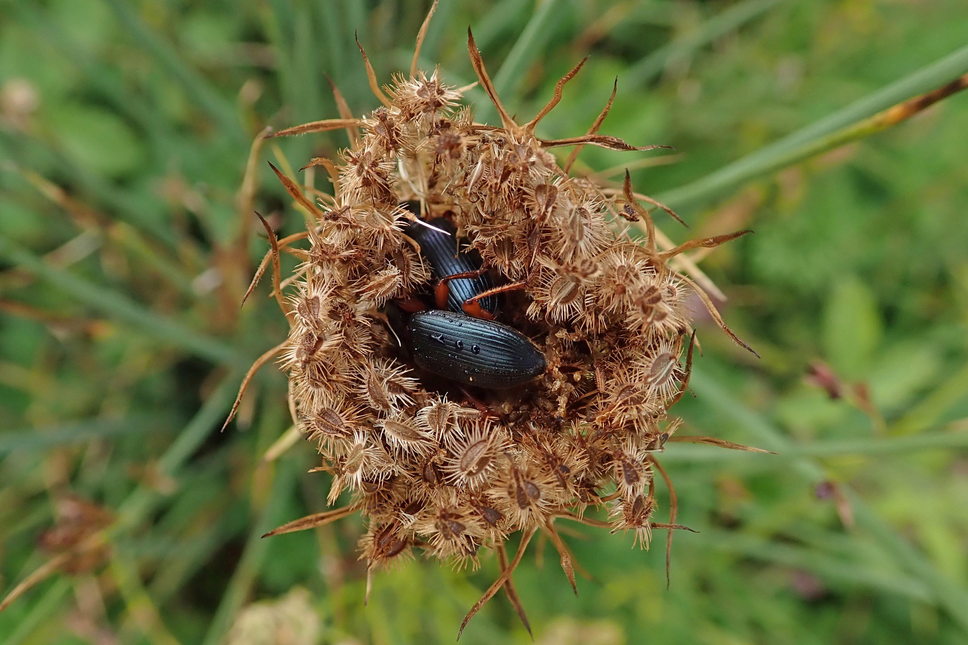 200905 beetles