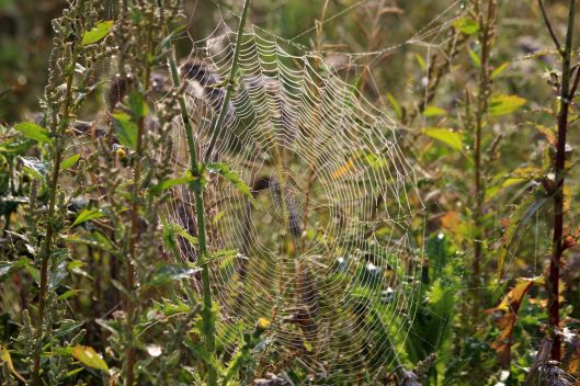 200918 cobwebs (2)