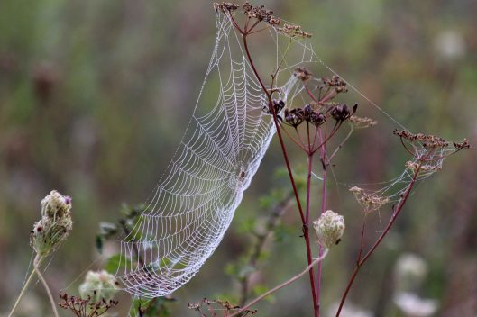 200918 cobwebs (3)