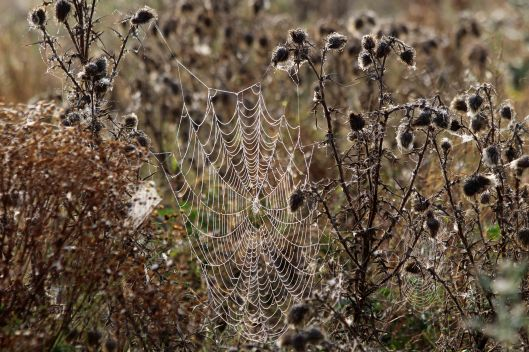 200918 cobwebs (4)