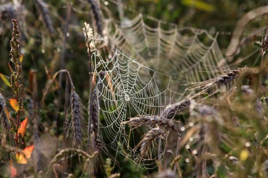 200918 cobwebs (6)