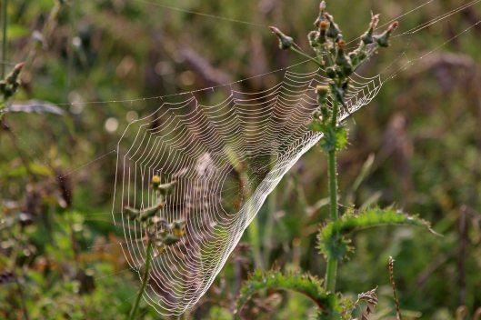 200918 cobwebs (7)