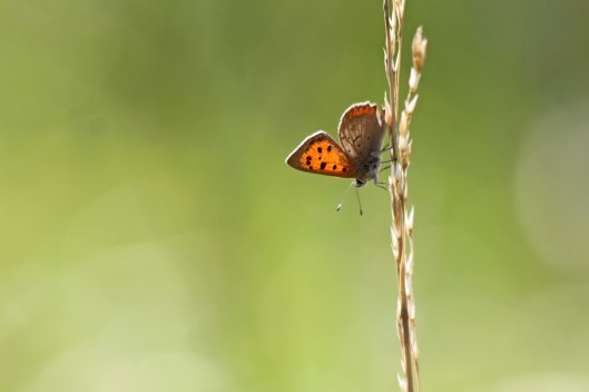 200926 small copper