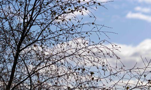 200928 trees (1)