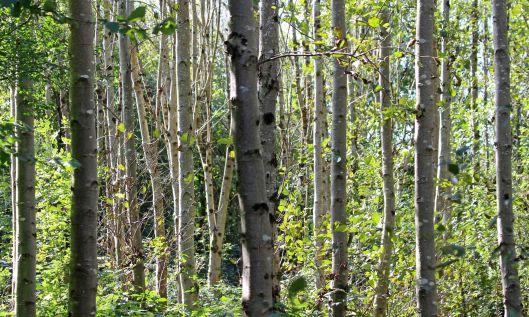 200928 trees (2)