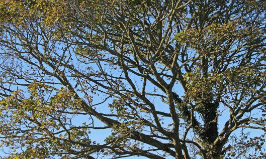 200928 trees (3)