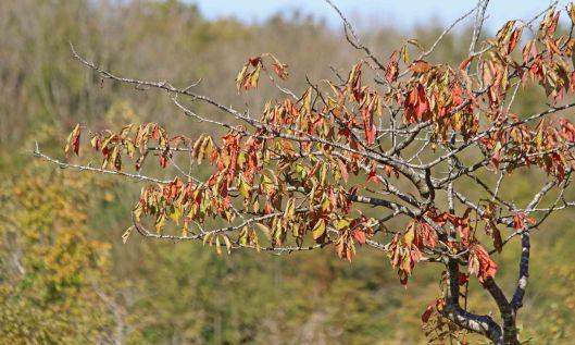 200928 trees (4)