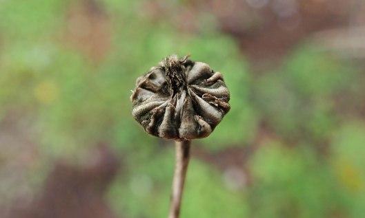 201004 seedheads (2)