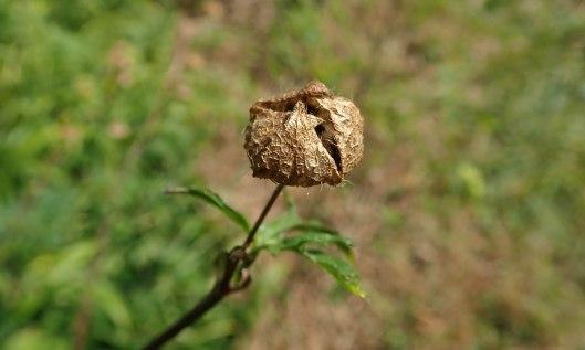 201004 seedheads (6)