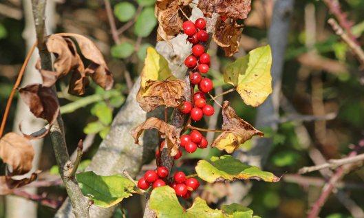 201011 fruits (1)