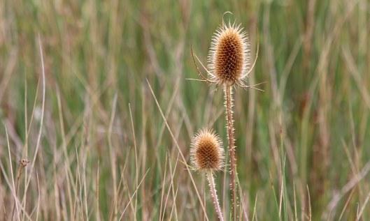 201018 seedheads (1)