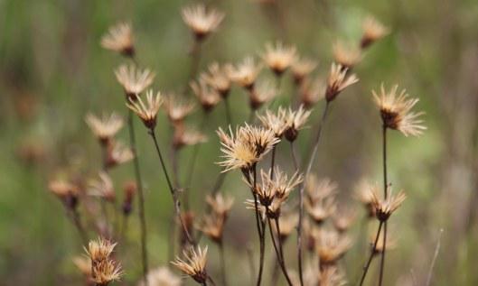 201018 seedheads (3)