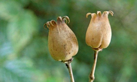 201018 seedheads (5)