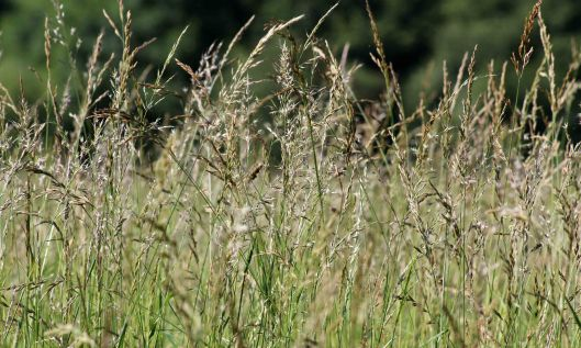 201018 seedheads (6)
