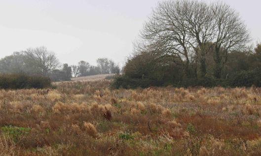 201108 a field
