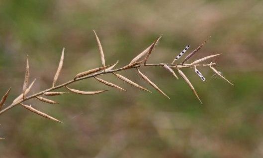 201118 seedheads (2)
