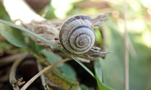201128 striped snail (2)