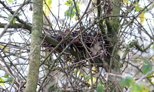 201216 nidification (1)