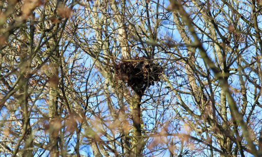201216 nidification (2)