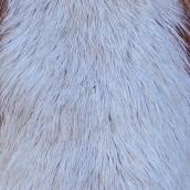 201224 11 horse