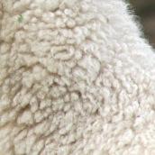 201224 9 sheep