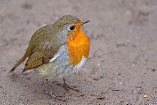 210107 round robin