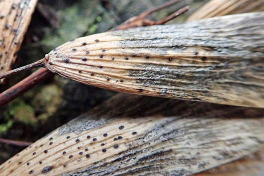 210112 ash key fungi (2)