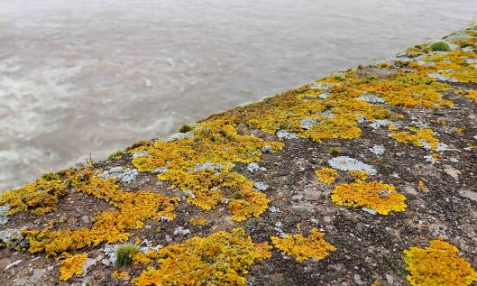210204 Barrage lichens (1)