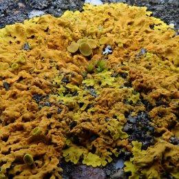 210204 Barrage lichens (2)