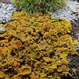 210204 Barrage lichens (5)