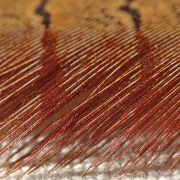 210215 pheasant feather (3)