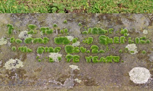 210227 mossy gravestone (2)
