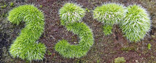 210227 mossy gravestone (3)