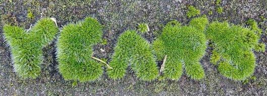 210227 mossy gravestone (4)