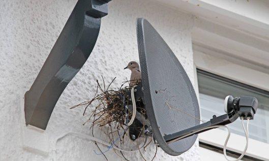210304 nest building