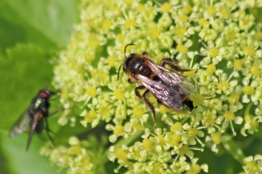 210310 bee parasite (1)