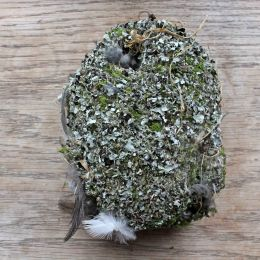 210314 Long-tailed tit nest (3)