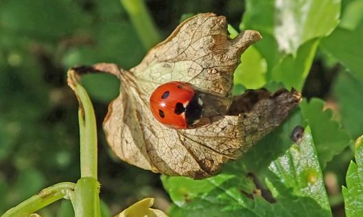 210318 ladybird (1)