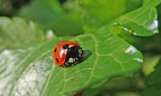 210318 ladybird (2)