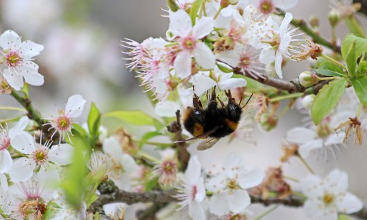 210322 blossom and bumbles (2)