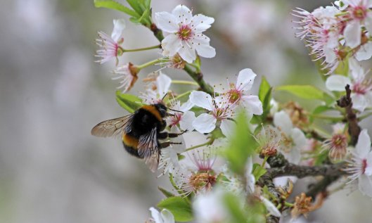 210322 blossom and bumbles (3)