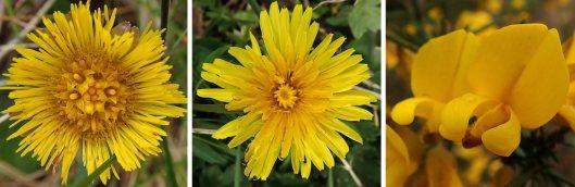 210411 yellow (1)