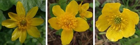 210411 yellow (2)